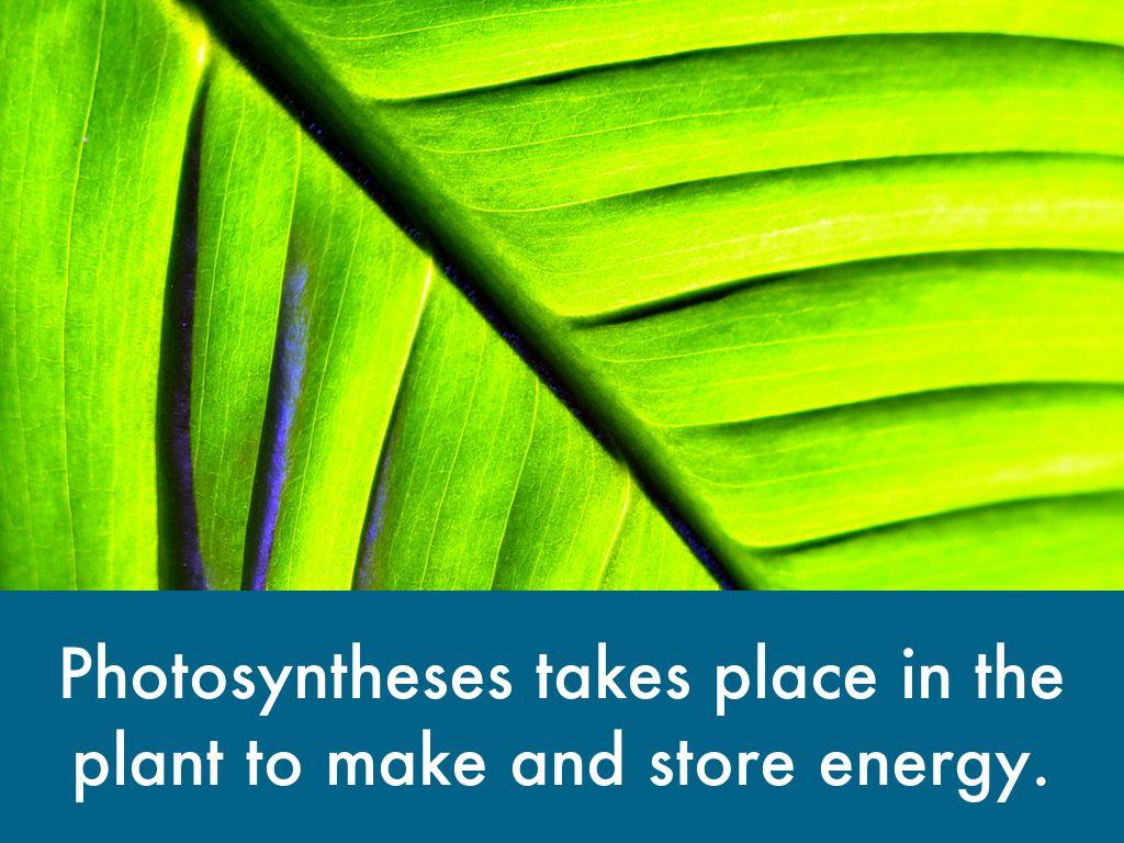 Science/ Plant Parts
