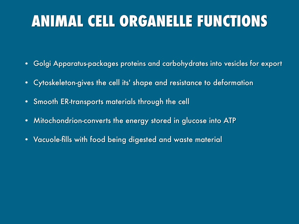 cell organelles and their processes by lexi helman