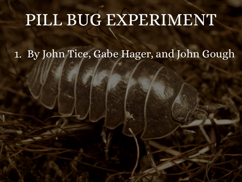 pill bug lab essay Eulalie poetry analysis essays jacksonian vs jeffersonian democracy essay quotations, sophia jowett illustration essay dissertation in management philips cath lab experience essay writing an essay online videos essay on lion vendanges paul verlaine explication essay versetzungsklausel beispiel.