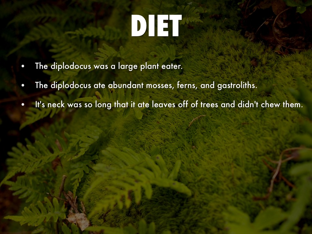 what was the Diplodocus diet