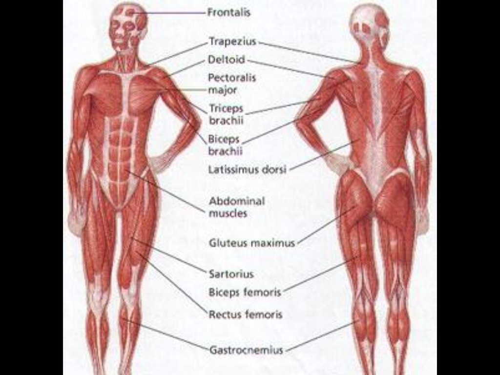 10 Body Systems By Agd0306