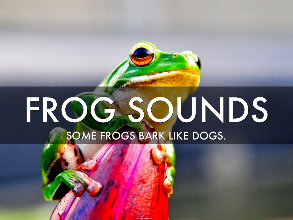 Frogs That Sound Like Dogs