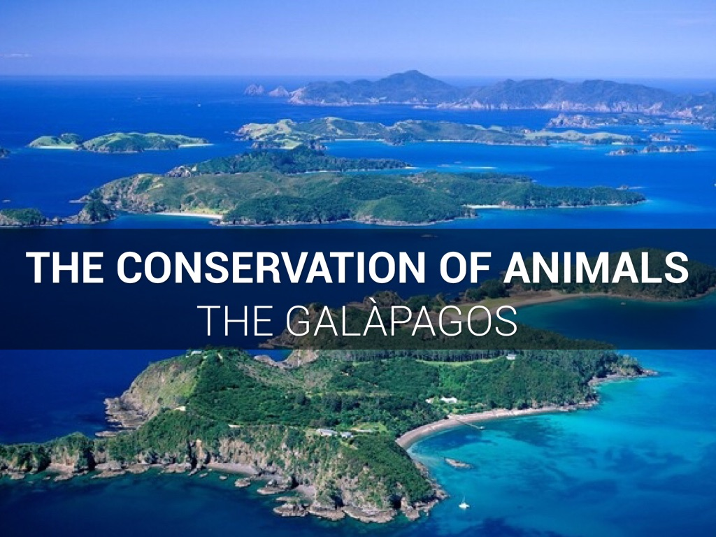The Galàpagos by Katerina Matuzny