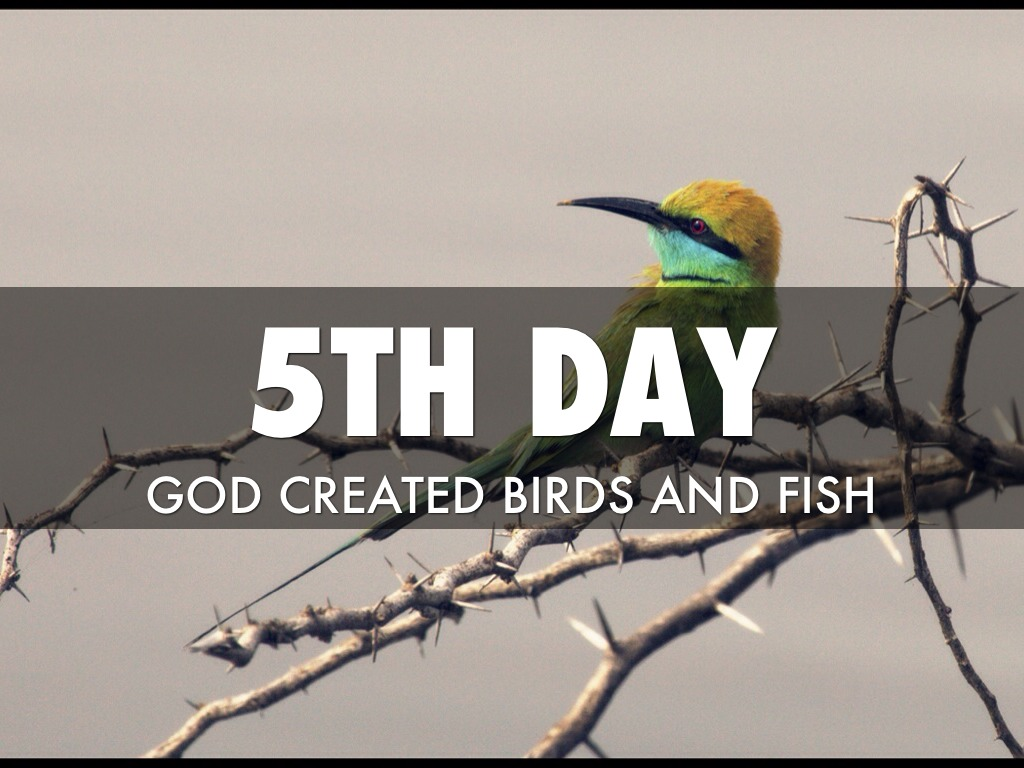 seven days of creation by robert kuhner