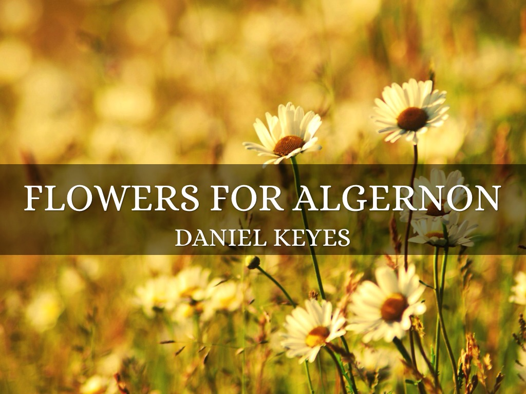 the intelligence operation on charlie gordon in flowers for algernon by daniel keyes Flowers for algernon was written by daniel keyes  flowers for algernon is a  algernon symbolizes charlie's intelligence when algernon gets confused.