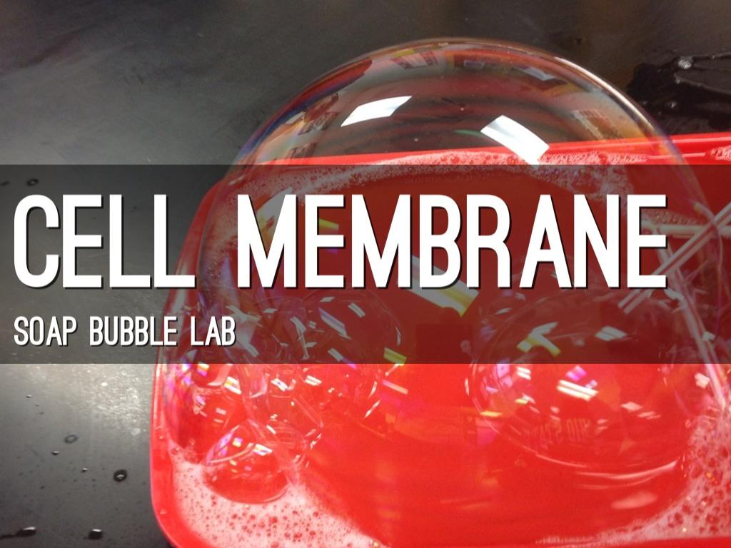 Cell Membrane Bubble Lab