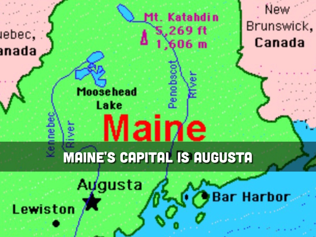 Maines State Flower Maine😀 by LEAH GLAZ...