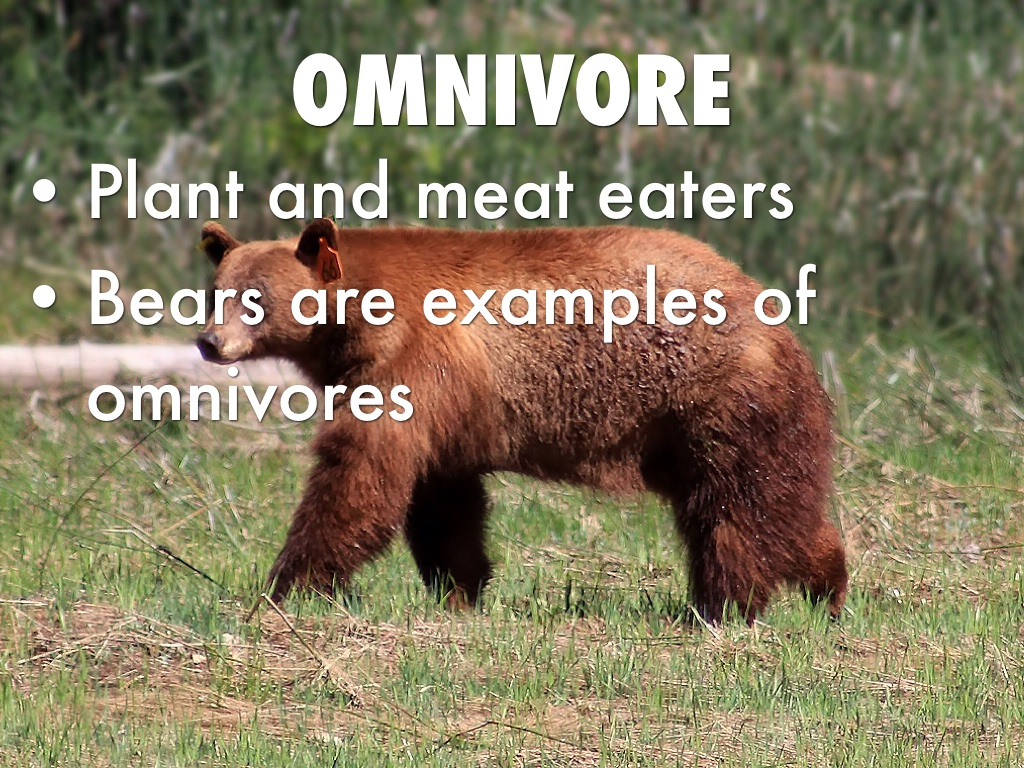 omnivore Omnivore™ selection find the multi-fit holster for youchoose between standard and light bearing options omnivore™ non-light bearing learn more.