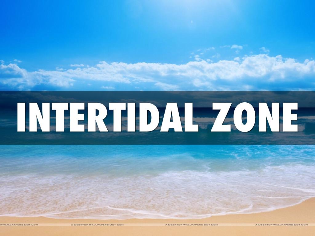 Intertidal zone plants