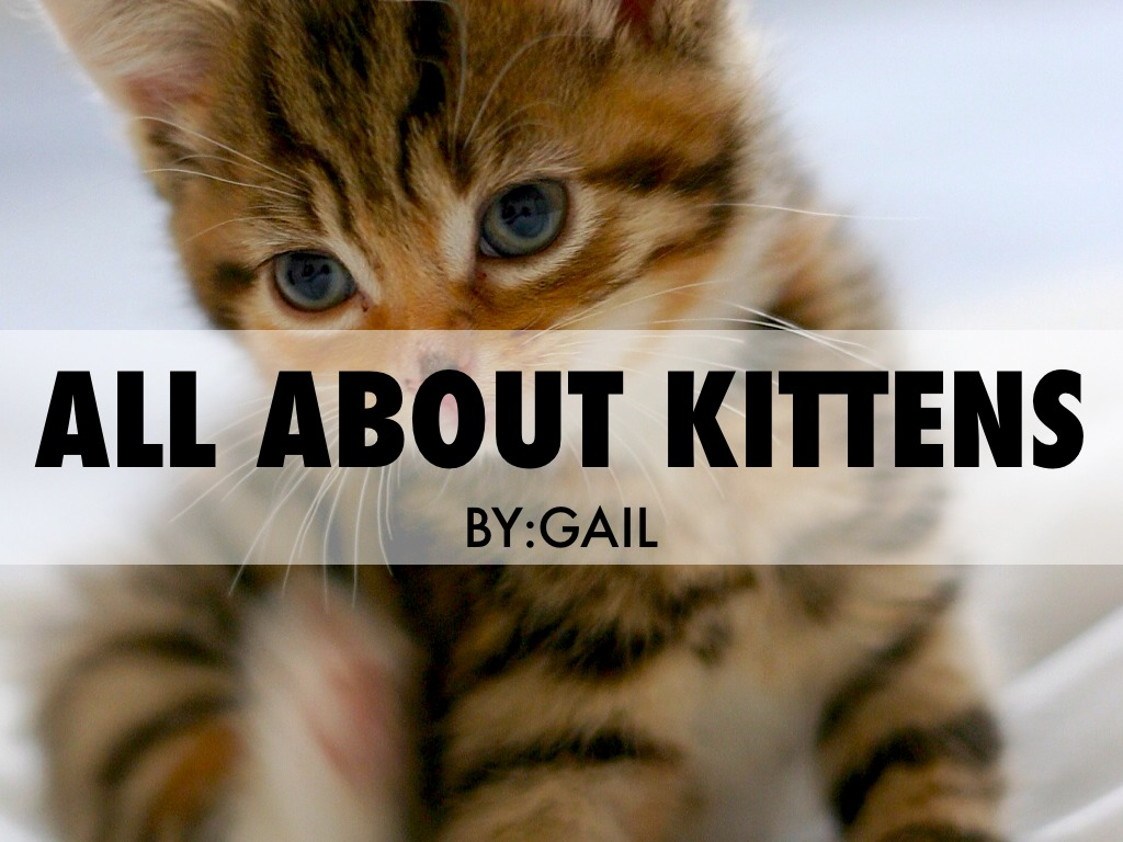 All About Kittens by 23ferng