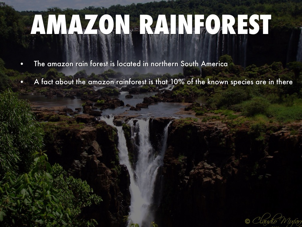 a synopsis about the amazon rainforest