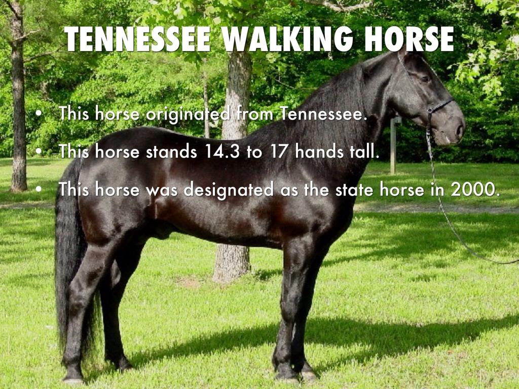 Horses by Megan Tidmore