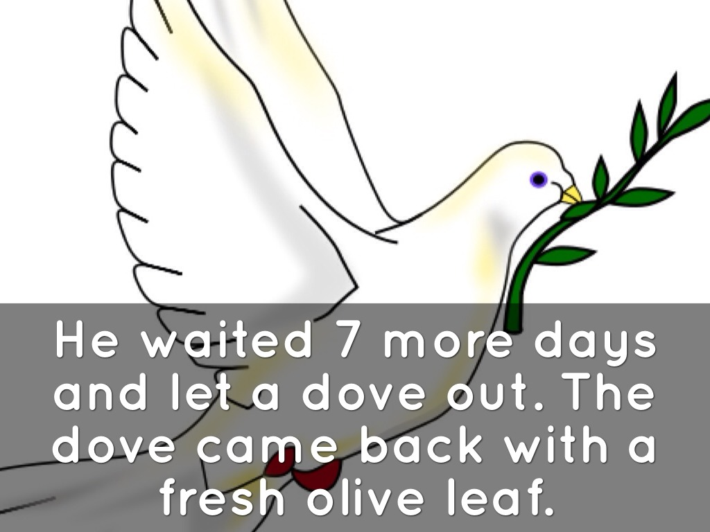 dove with olive leaf Noah's dove and the olive leaf – sermon for september 4, 2011 genesis 8:6- 12 6 after forty days noah opened a window he had made in the ark 7 and sent out a raven, and it kept flying back and forth until the water had dried up from the earth 8 then he sent out a dove to see if the water had receded.