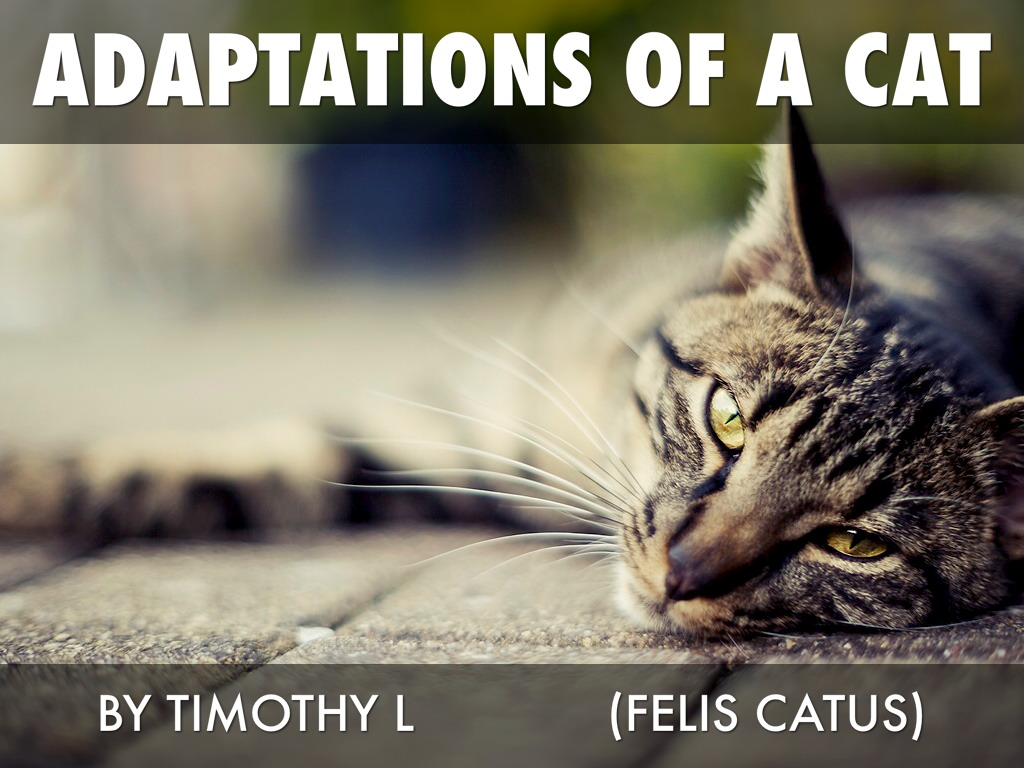 Adaptations Of A Cat by Timothy L