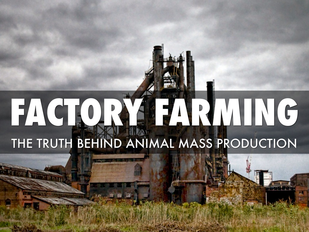 Factory farming essay