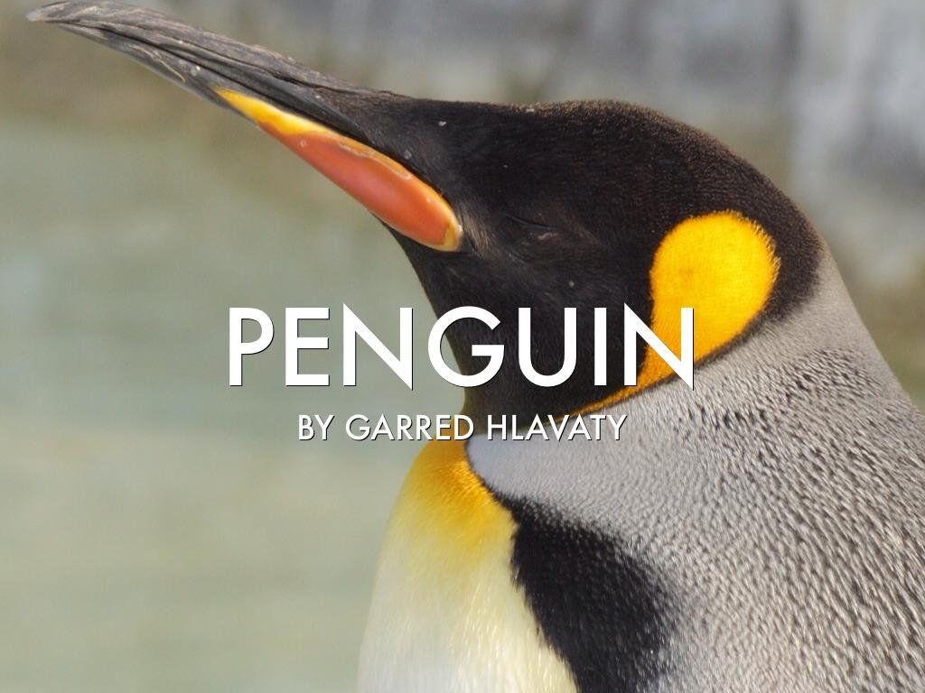 Where do emperor penguins live