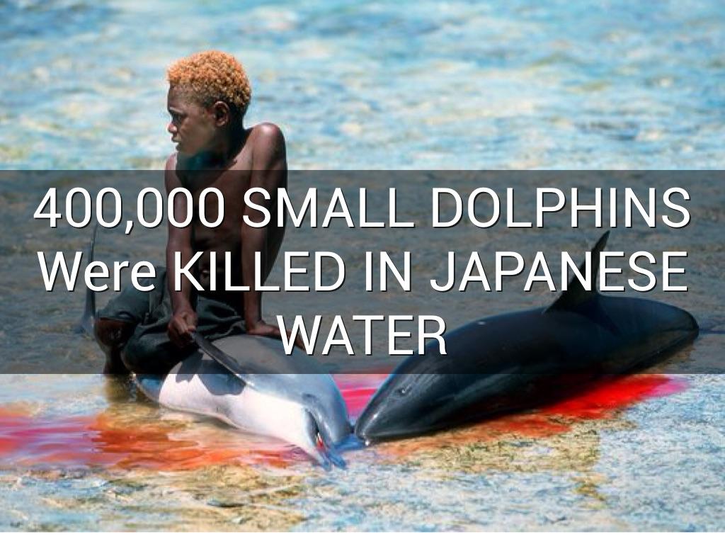 Dolphin haiku
