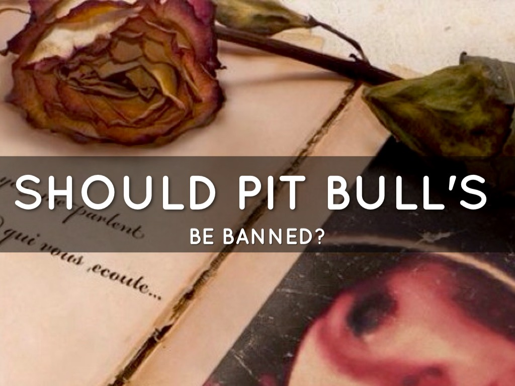 should pit bulls be illegal Whether to ban pit bulls is a human health and safety issue that should be steered by health and safety officials public safety is not the profession of animal advocates.