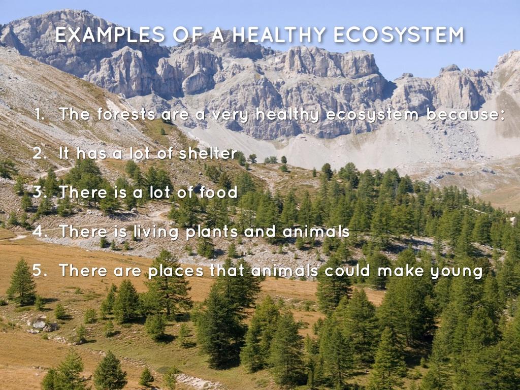 Habitats Vs Ecosystems By Sarah Kim