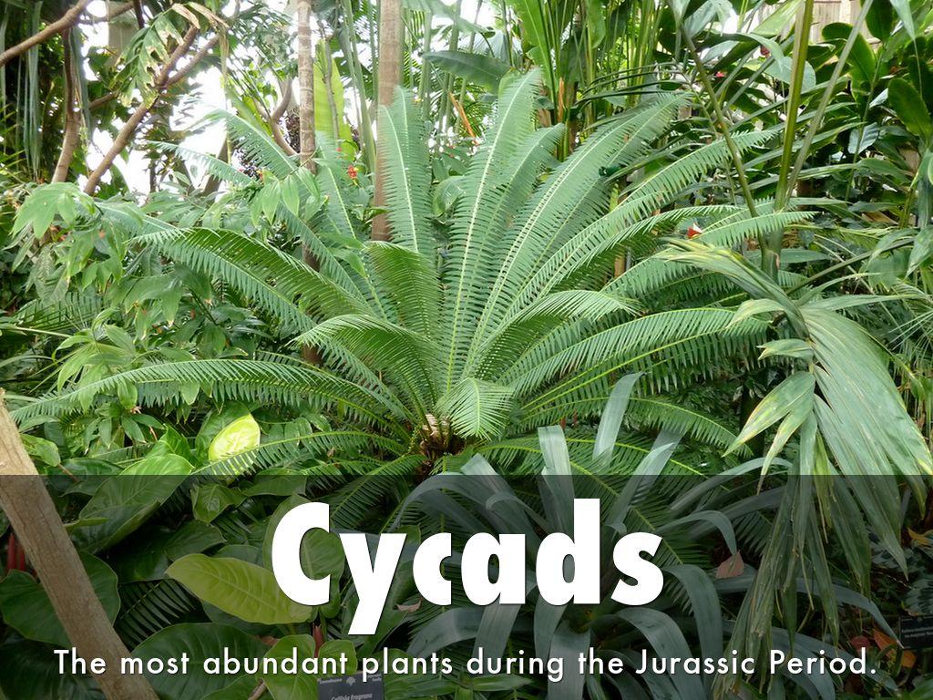 Triassic Period Plants Jurassic Animals &...