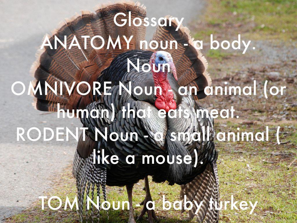 Turkey Facts by Kipley Mapson
