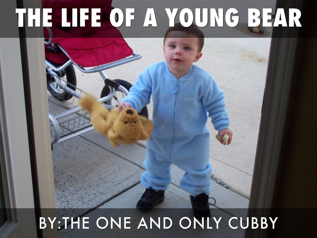The life of a young bear