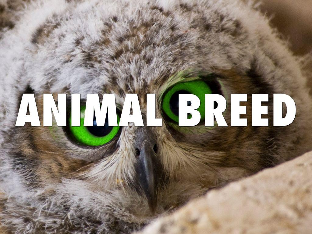 Animal Breed