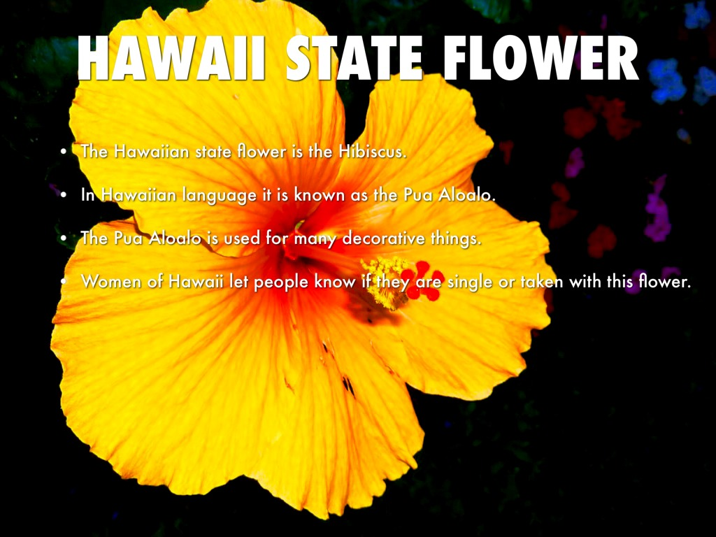 Copy of hawaii by alexander samaniego hawaii state flower izmirmasajfo Gallery