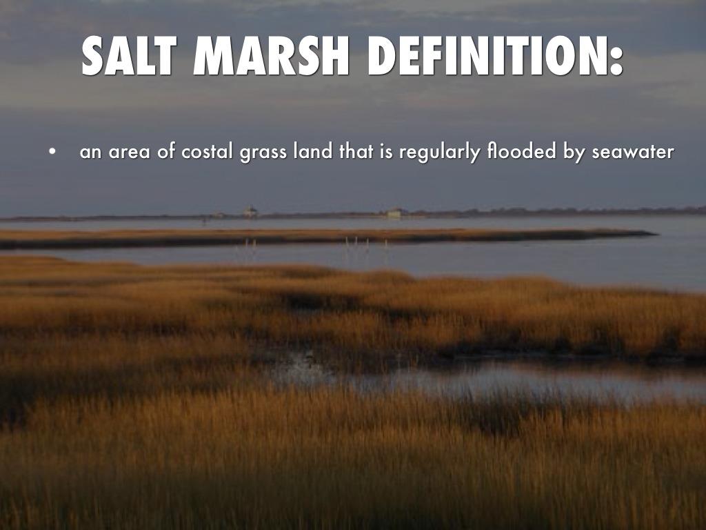 salt marsh notes 2008-11-21 date release notes  the salt marsh at marshside,  report on the salt marshes at marshside, southport 4 31 salt marsh morphology there are.