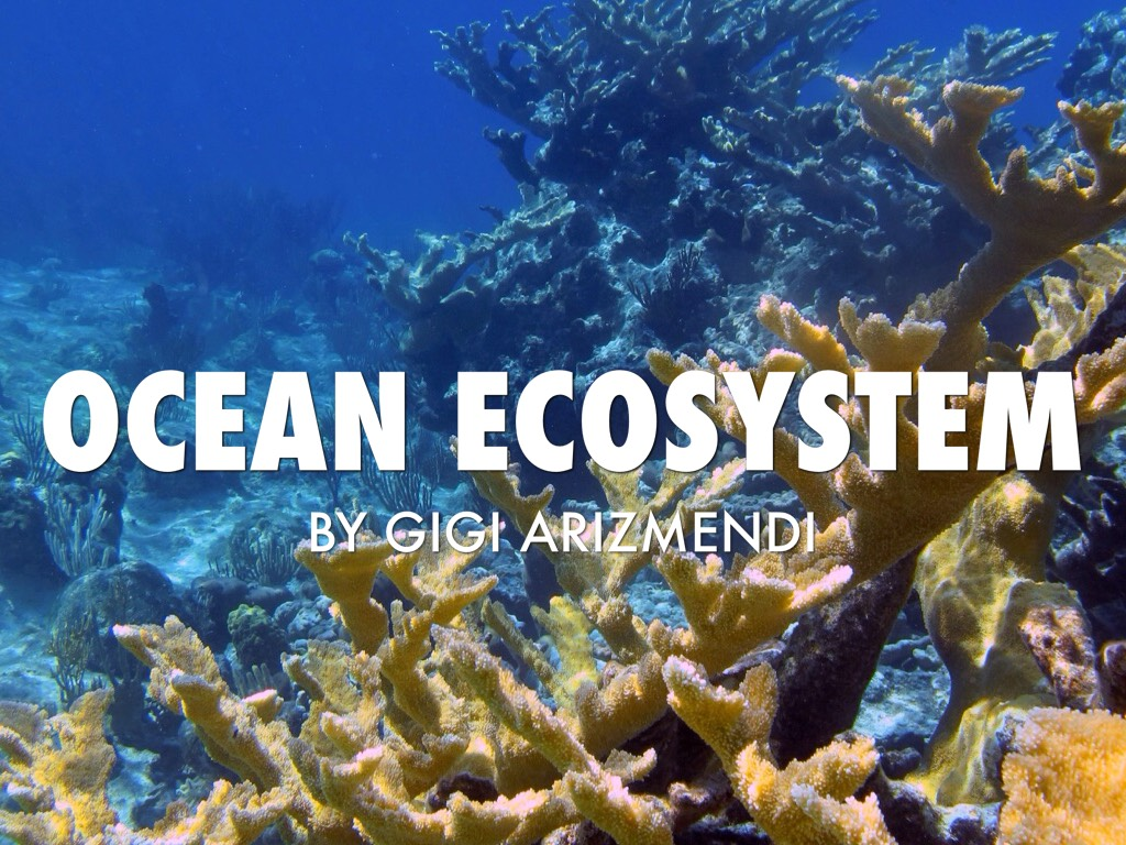 ocean ecosystem The ocean is more than just the waves we see hitting the shoreline it is a fascinating and mysterious ecosystem in this lesson, you will learn.