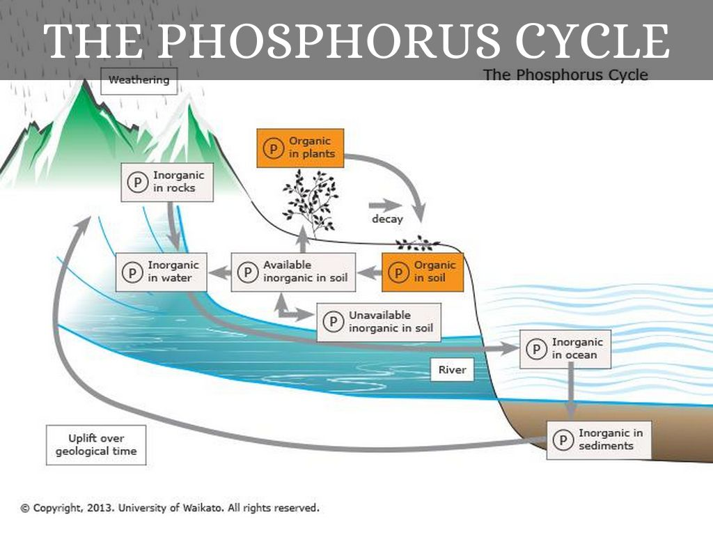 phosphorus cycle essay Access to over 100,000 complete essays and term papers the nitrogen cycle is a some examples include carbon cycle, the nitrogen cycle, and the phosphorus.