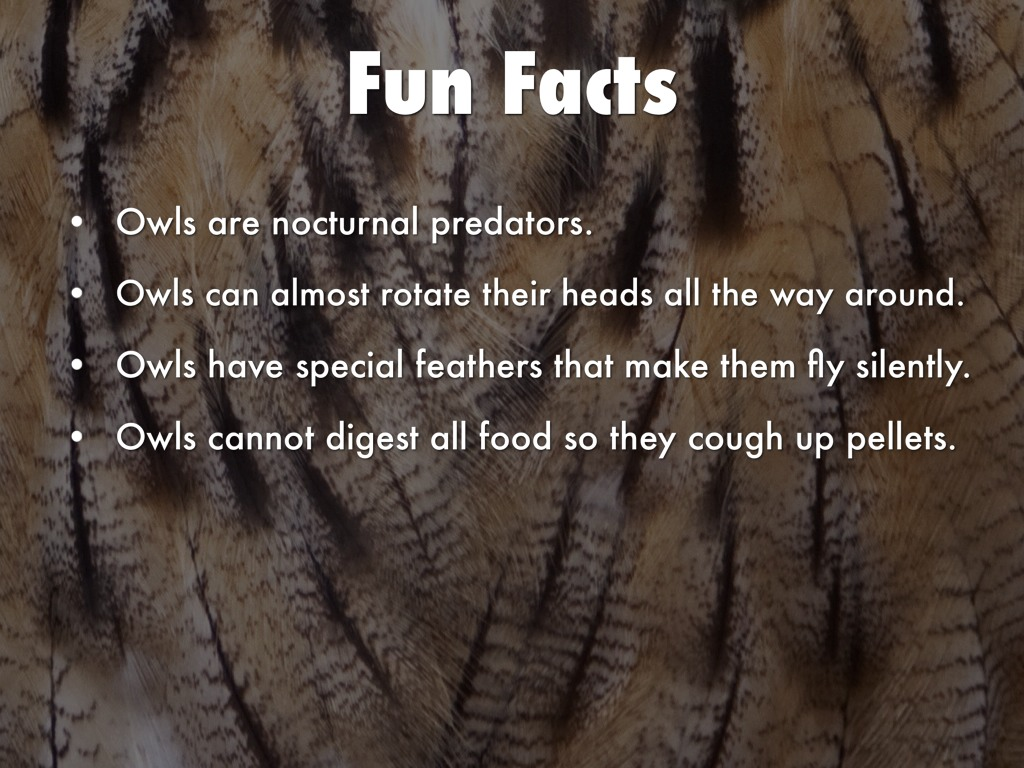 What are some facts about owls?