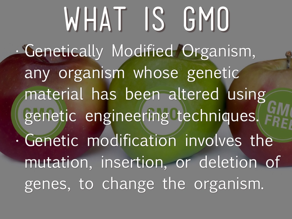 genetically modified organisms are organisms that's Genetically modified organisms ( gmo's ) are the organisms which result when a gene is taken from one organism to another organism in the laboratory for improving its functioning ability or for obtaining desirable results.