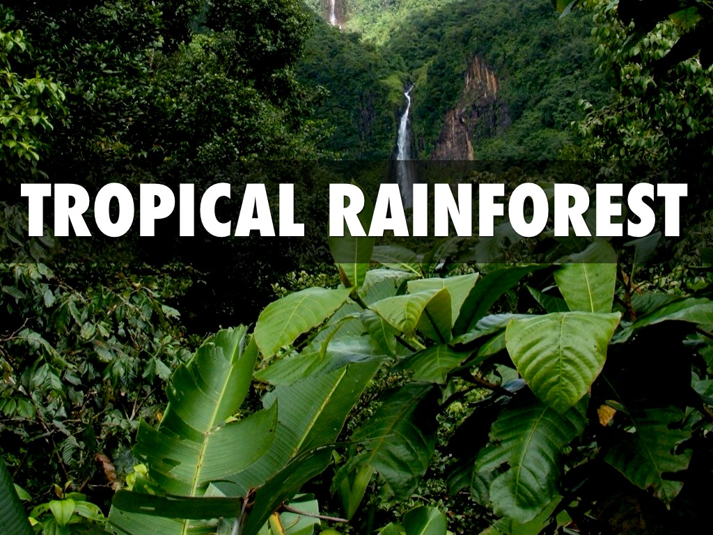 Tropical Rainforest Biome  Earth Eclipse