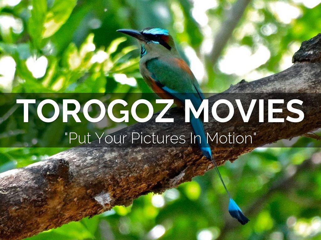 torogoz movies