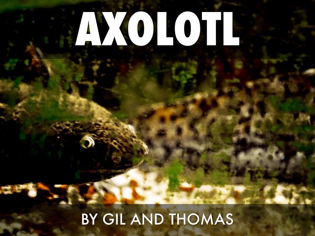 axolotl adaptations