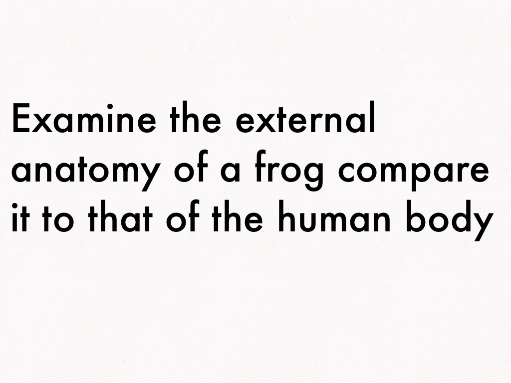 Frog Dissection by Emma Kleist