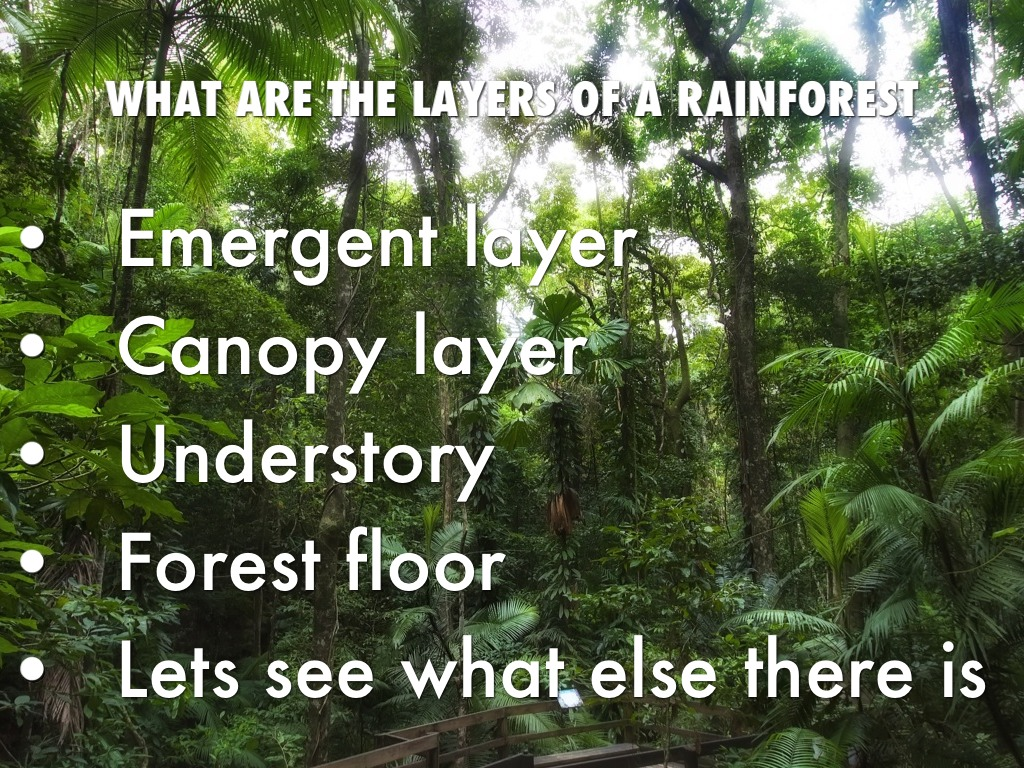 what is the understory by faizana faiz