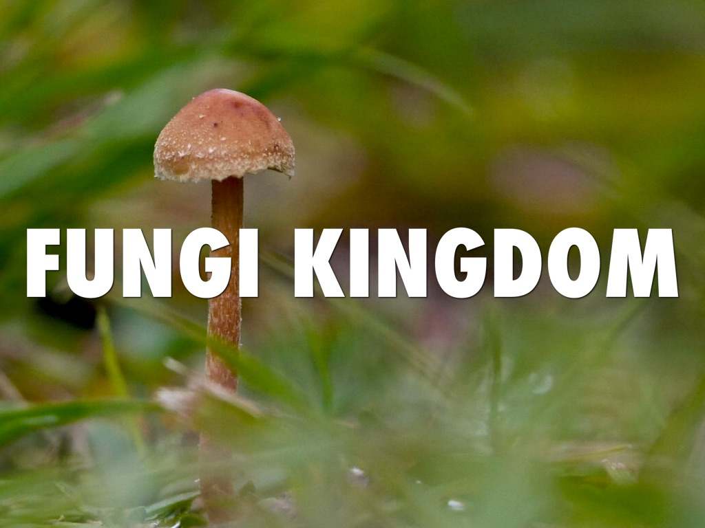 protists and fungi Biology / biology article / kingdom- monera, protista and fungi kingdom- monera, protista and fungi  some protists are pathogens of both plants and animals .