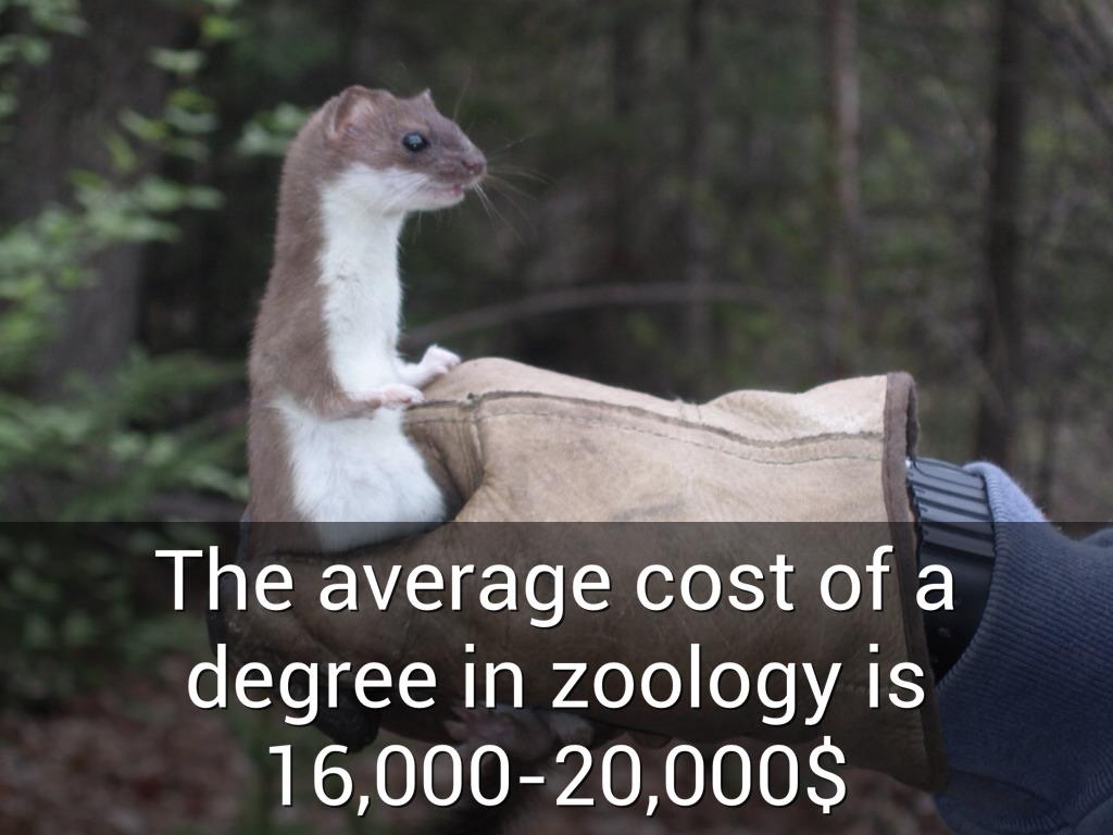 Zoology by blawson997