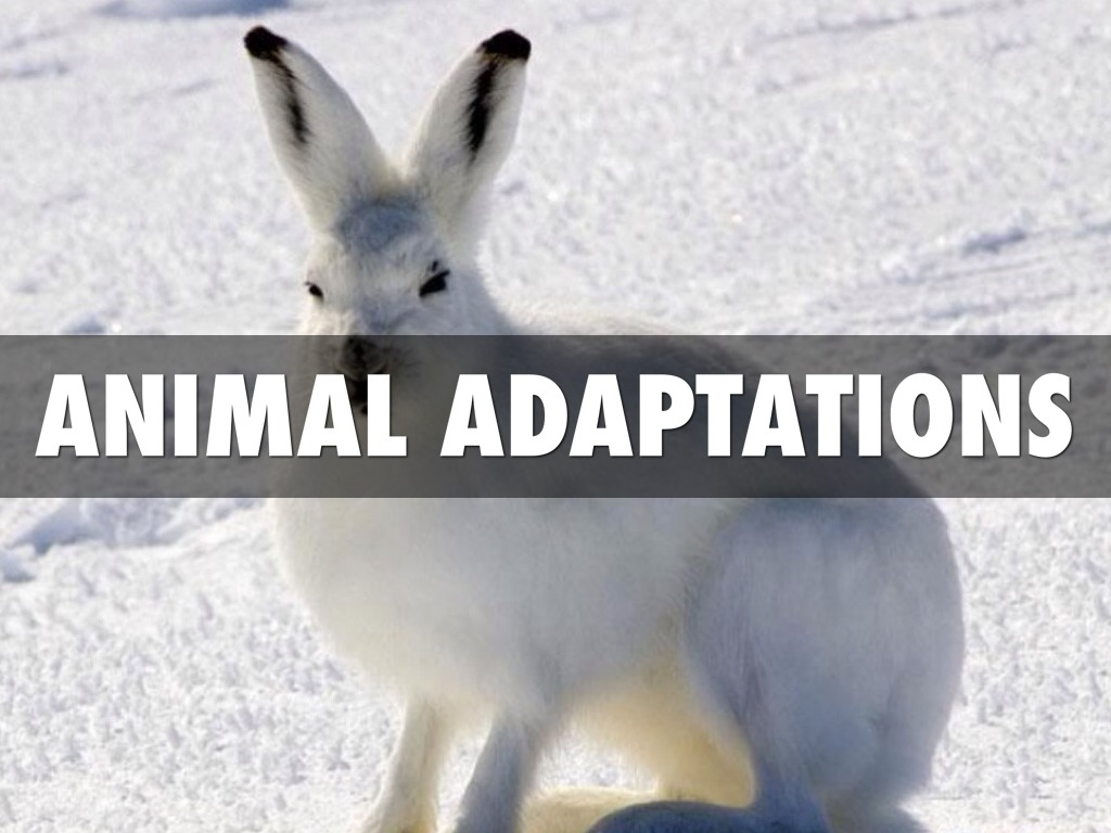 animal adaptation - photo #16