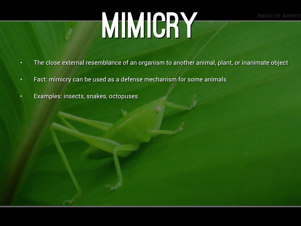 What Are Some Animals That Use Mimicry?