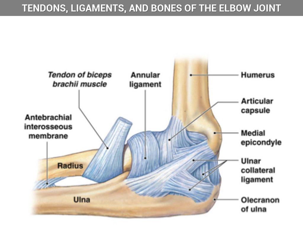 1WRMkvHDjq_1446166667645?theme\\\=Refresh\\\&rasterSignature\\\=66bab7de883eb0da42f89341bf0c39ee\\\&imageFilter\\\=false diagram arm tendons ligaments trusted wiring diagram online