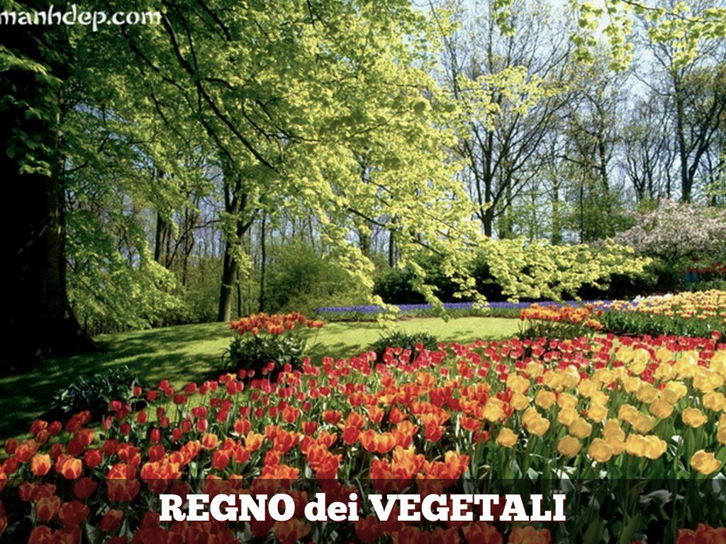 I 5 REGNI: REGNO MONERE by francescamacori
