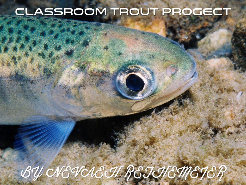 Trout Progect by Nevaeh Rethemeier