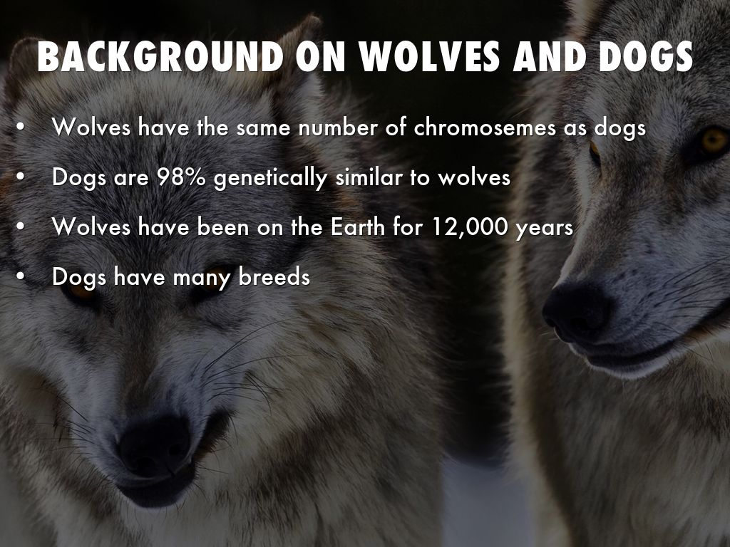 The wolf is the same dog. Why not bark