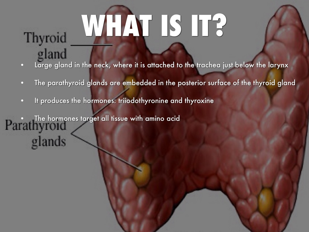 thyroid gland When the thyroid gland produces too much or too little thyroid hormone, it can  cause  symptoms of an underactive thyroid and menopause.