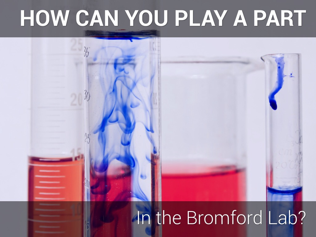 How Can You Get Involved With The Bromford Lab?