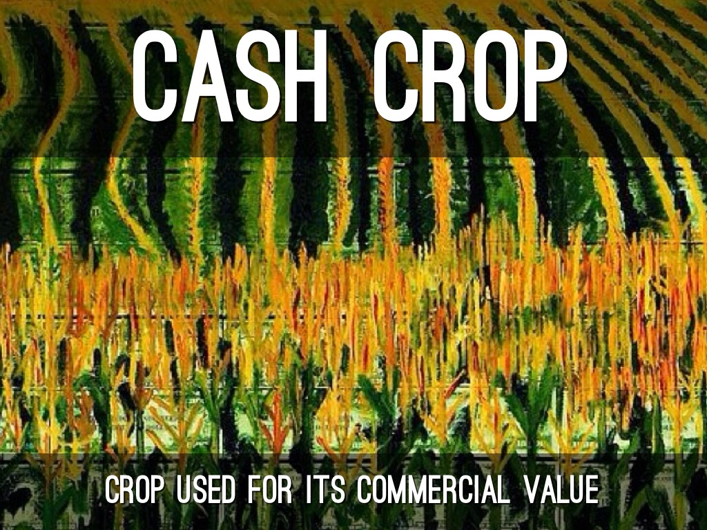 cash crop Check out cash crop on amazon music stream ad-free or purchase cd's and mp3s now on amazon.