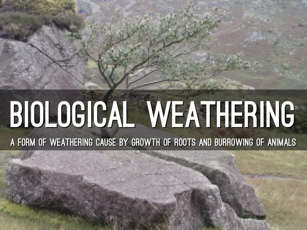 biological weathering You are here: home  geotopics  rocks, resources and scenery  rock and weathering  rocks, resources and scenery   biological weathering is the effect of living.